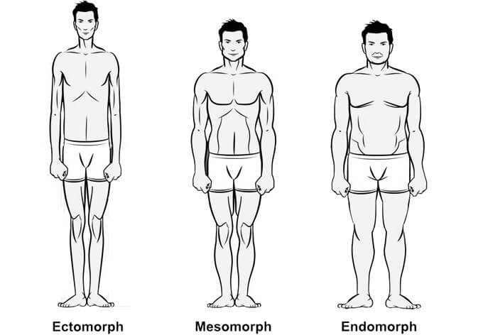 test tipusok izomtomeg fajtak
